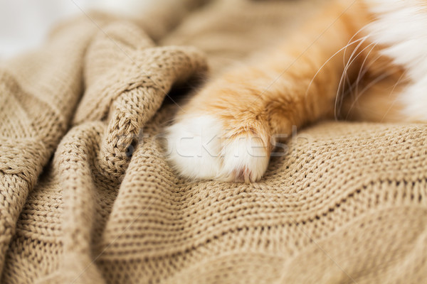 close up of red cat paw on knitted blanket Stock photo © dolgachov