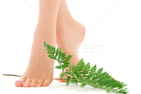 Női láb zöld levél kép fehér nő Stock fotó © dolgachov