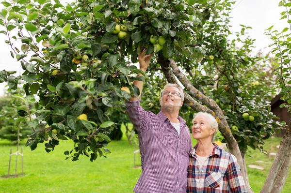 Stock fotó: Idős · pár · almafa · nyár · kert · gazdálkodás · kertészkedés