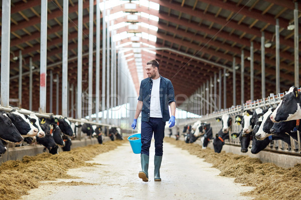 cows and man with bucket of hay walking at farm Stock photo © dolgachov