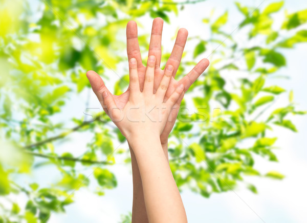 Padre bambino mani insieme foglie verdi famiglia Foto d'archivio © dolgachov