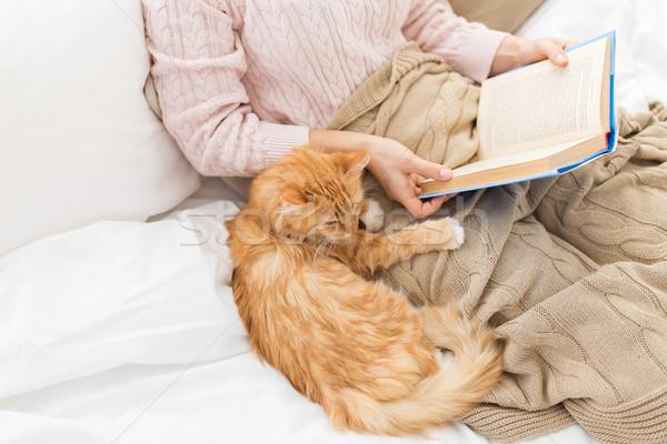красный кошки женщины владелец чтение книга Сток-фото © dolgachov