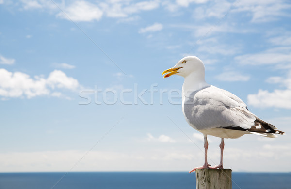 seagull over sea and blue sky Stock photo © dolgachov