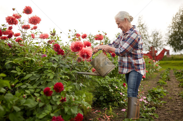 senior woman watering flowers at summer garden Stock photo © dolgachov