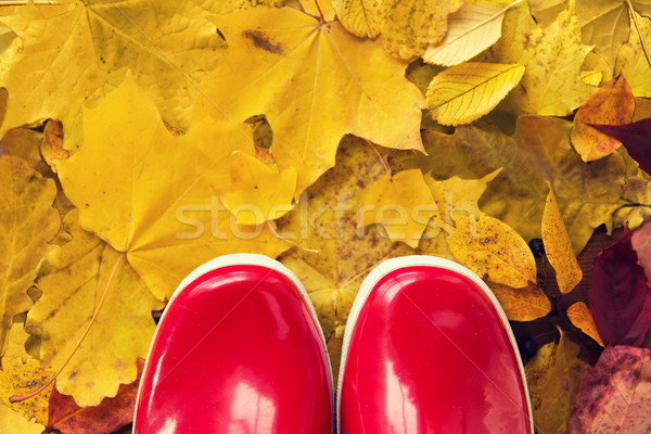close up of red rubber boots on autumn leaves Stock photo © dolgachov