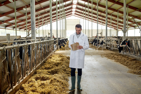 veterinarian with cows in cowshed on dairy farm Stock photo © dolgachov