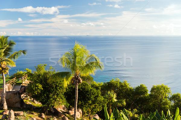 Indian oceaan eiland palmbomen reizen Stockfoto © dolgachov