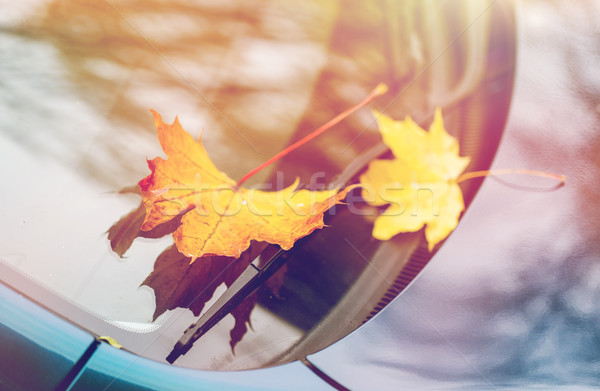 close up of car wiper with autumn leaves Stock photo © dolgachov