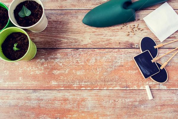 Zaailingen tuinieren tuin zaden Stockfoto © dolgachov