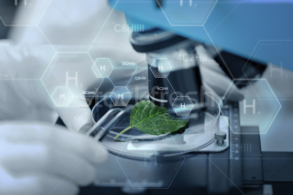 手 顕微鏡 緑色の葉 科学 化学 ストックフォト © dolgachov