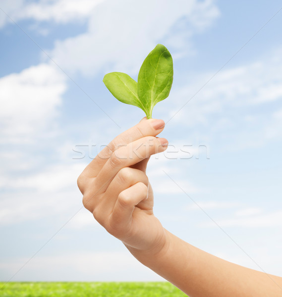 close up of woman hand with green sprout Stock photo © dolgachov