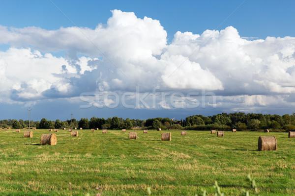 Saman yaz alan tarım hasat Stok fotoğraf © dolgachov