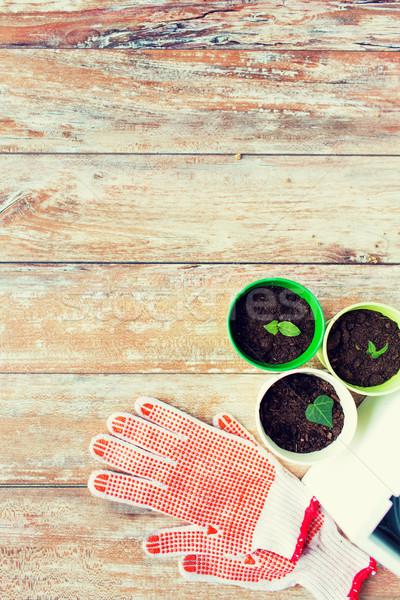 Zaailingen tuin handschoenen tuinieren Stockfoto © dolgachov