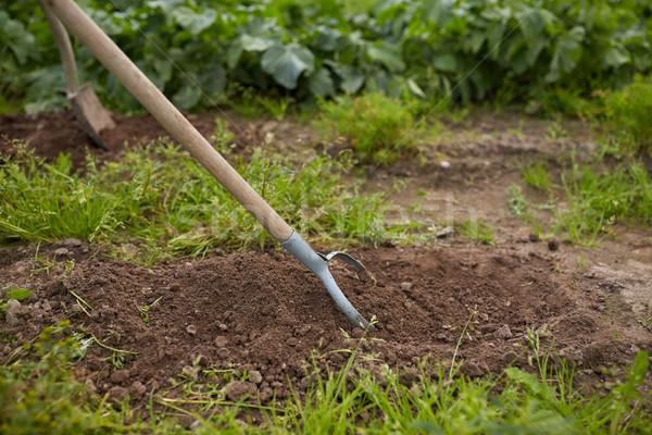 прополка саду кровать фермы садоводства Сток-фото © dolgachov