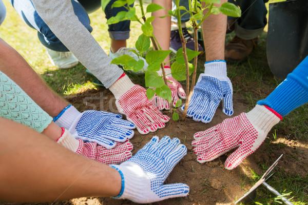 group of volunteers hands planting tree in park Stock photo © dolgachov