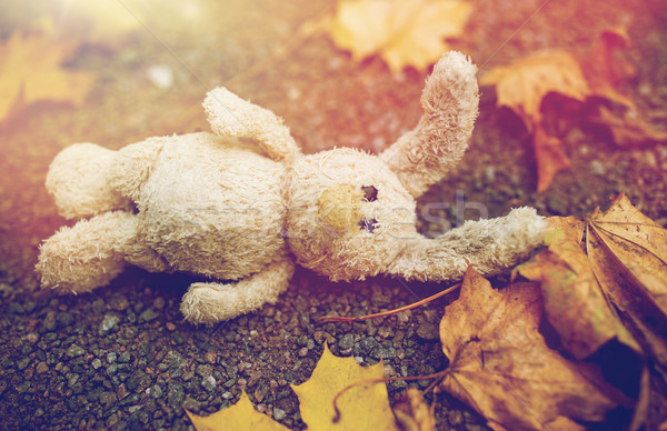 toy rabbit and autumn leaves on road or ground Stock photo © dolgachov