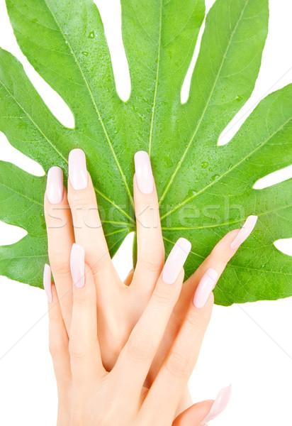 女性 手 緑色の葉 画像 白 女性 ストックフォト © dolgachov