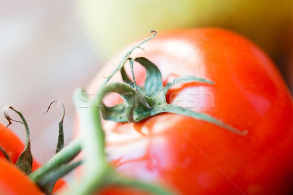 close up of ripe juicy red tomatoes Stock photo © dolgachov