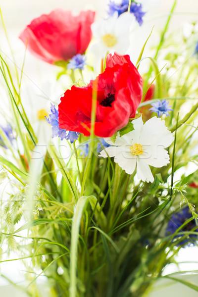 красивой Полевые цветы садоводства ботаника лет Сток-фото © dolgachov