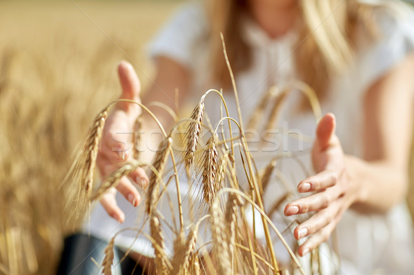 close up of woman hands in cereal field Stock photo © dolgachov