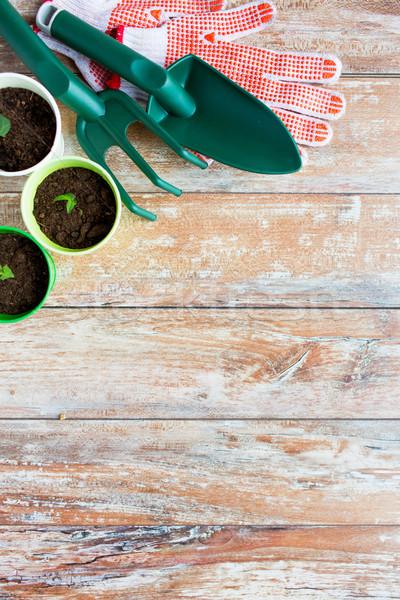 Zaailingen tuin tools tuinieren Stockfoto © dolgachov
