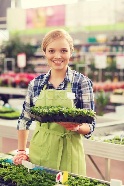 Feliz mujer planta de semillero invernadero personas Foto stock © dolgachov