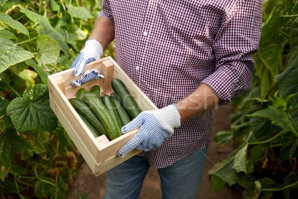Hombre cuadro pepinos granja invernadero Foto stock © dolgachov