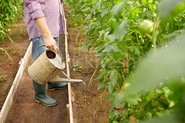 Senior uomo annaffiatoio farm serra Foto d'archivio © dolgachov