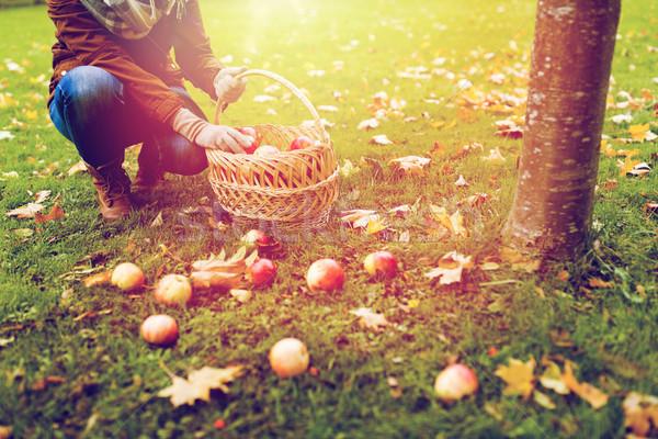 woman with basket picking apples at autumn garden Stock photo © dolgachov