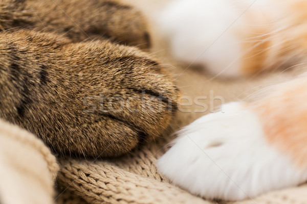 close up of paws of two cats on blanket Stock photo © dolgachov