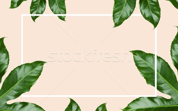 Yeşil yaprakları dikdörtgen biçiminde çerçeve bej doğa organik Stok fotoğraf © dolgachov