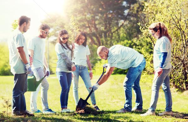 Grupo voluntarios árbol parque voluntariado Foto stock © dolgachov