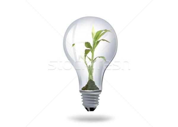 light bulb with plant inside Stock photo © dolgachov