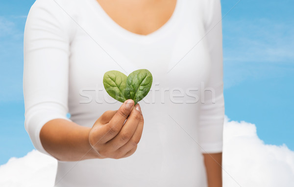 closeup woman hand with green sprout Stock photo © dolgachov