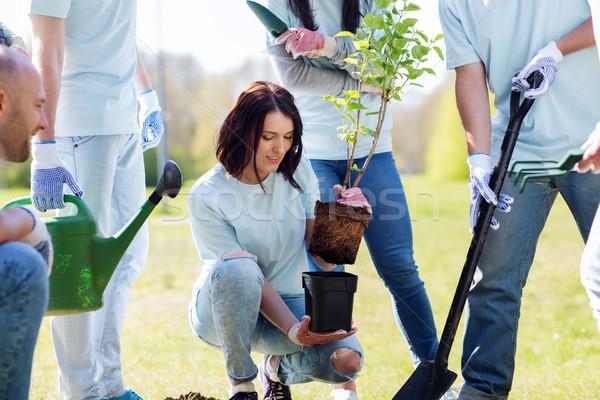 group of volunteers planting tree in park Stock photo © dolgachov