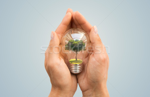 Stock photo: hands holding light bulb with tree inside
