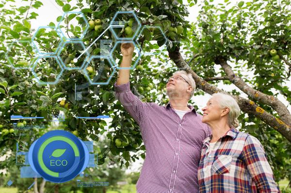 Stock fotó: Idős · pár · almafa · nyár · kert · organikus · gazdálkodás