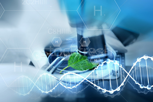 close up of hand with microscope and green leaf Stock photo © dolgachov