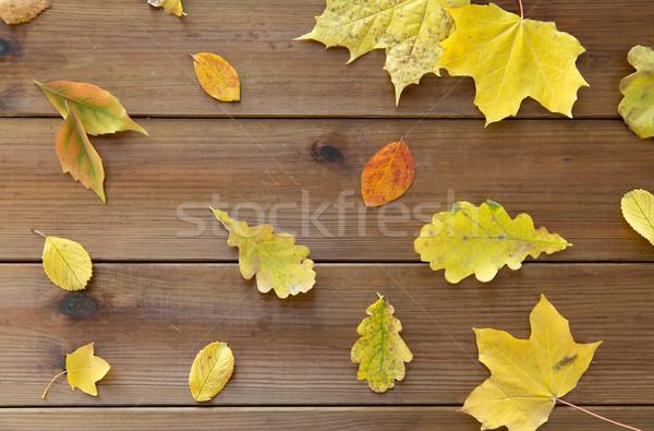 set of many different fallen autumn leaves Stock photo © dolgachov