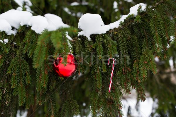 Stock fotó: Cukorka · sétapálca · karácsony · labda · fenyőfa · ág