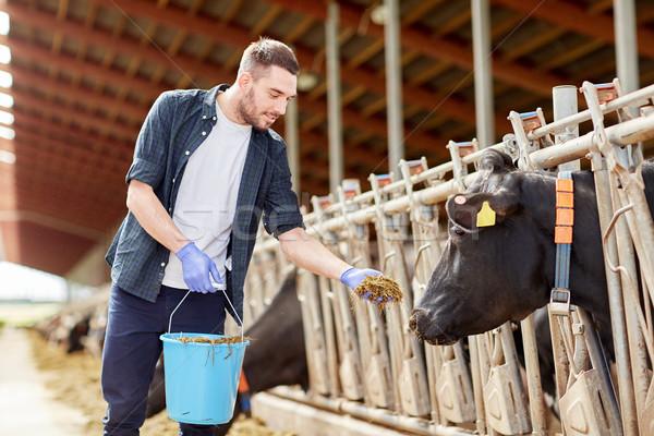 Homem vacas feno laticínio fazenda Foto stock © dolgachov