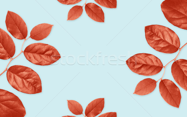 red leaves on blue background Stock photo © dolgachov