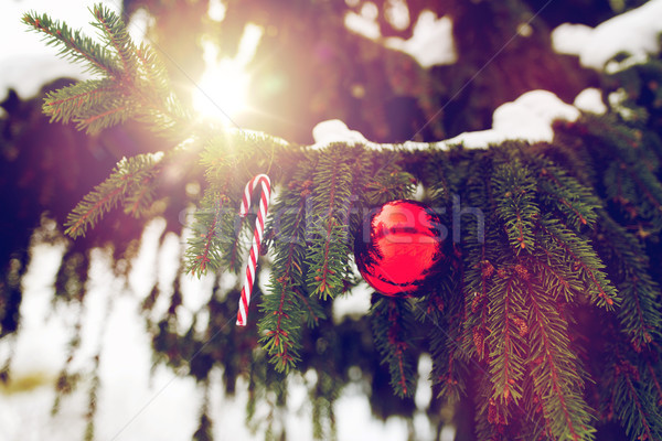candy cane and christmas ball on fir tree branch Stock photo © dolgachov