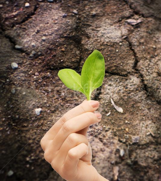 Donna mano impianto suolo fecondità Foto d'archivio © dolgachov