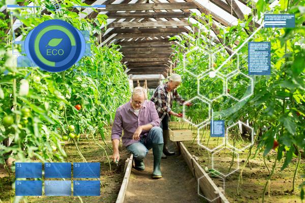 Casal de idosos trabalhando fazenda estufa orgânico Foto stock © dolgachov