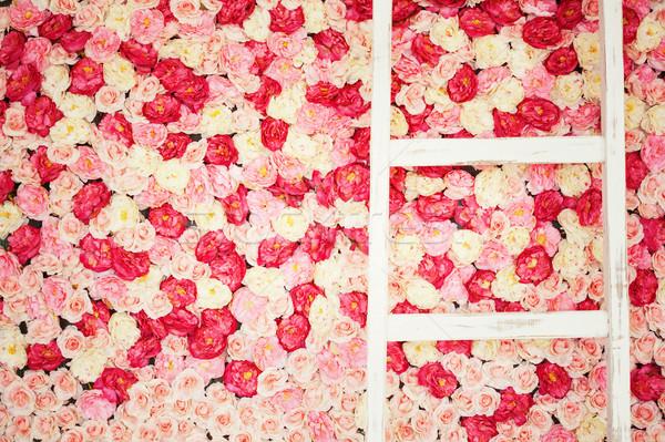 background full of white and pink roses Stock photo © dolgachov