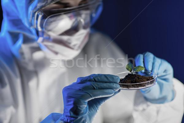 Naukowiec roślin gleby laboratorium nauki Zdjęcia stock © dolgachov