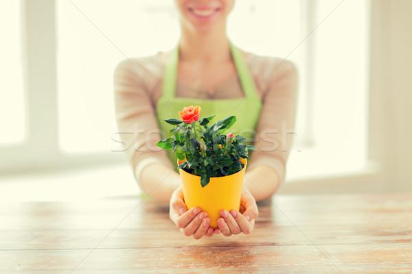 Frau Hände halten Rosen Busch Stock foto © dolgachov