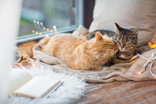 Dois gatos janela cobertor casa animais de estimação Foto stock © dolgachov