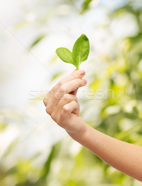 Stock photo: woman hand with green sprout